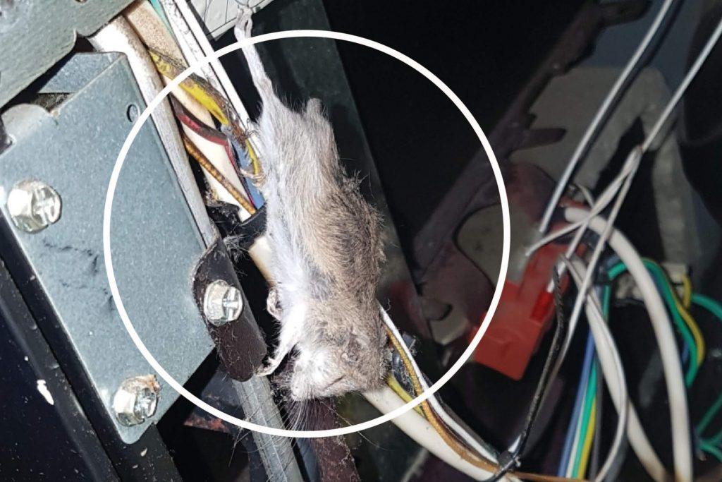 Electric Avenue Mouse