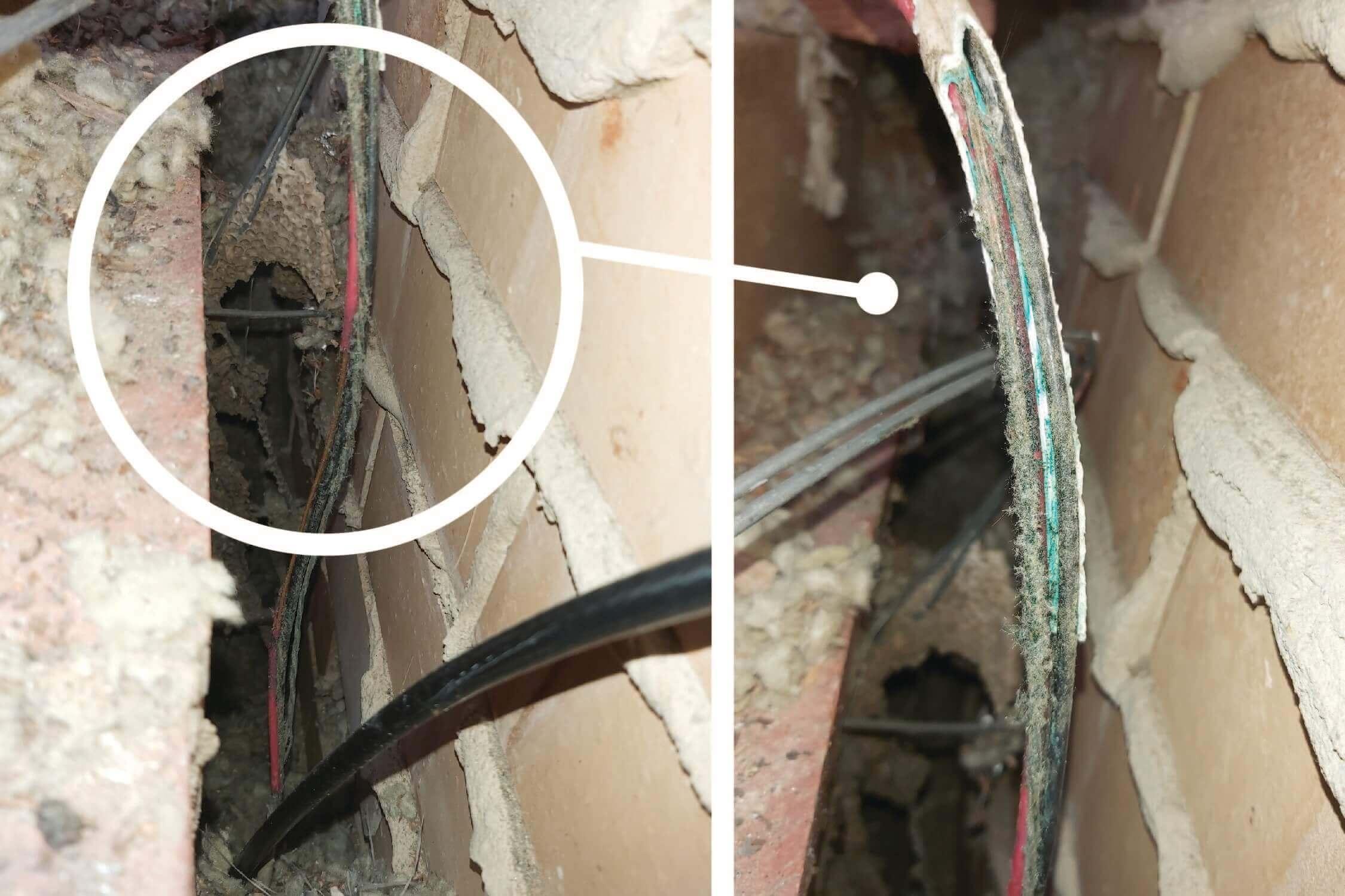 Birds strip out wiring