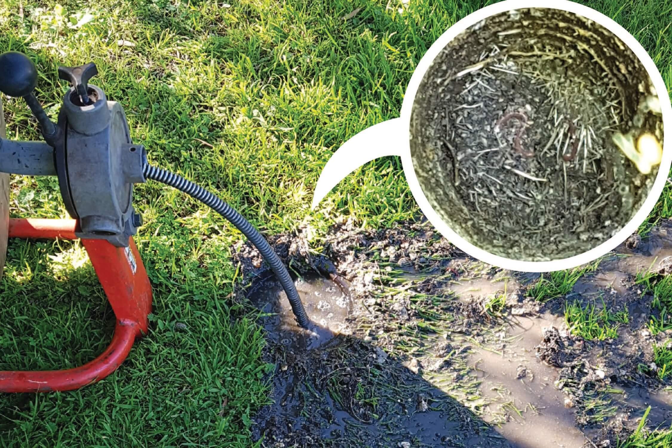 Spring drain strain